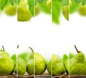 Pear mix Royalty Free Stock Photos