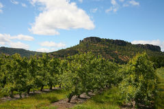 Free Pear Orchard Stock Photos - 5423673