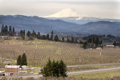 Pear Orchard in Hood River Oregon. Pear Orchards in Hood River Oregon with Mount Adams stock photography