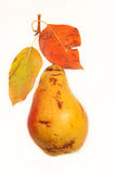 Pear på vit bakgrund Royaltyfri Foto