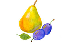 Pear and plums. Pear and two plums isolated on white background, watercolors illustration and paper texture Stock Image