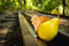 Pear on the rails. In the wood with yellow leaf royalty free stock images