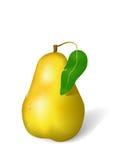 Pear ripe Stock Image
