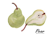 Pear set .Hand drawn watercolor painting on white background.Vector illustration Stock Photos
