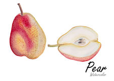Pear set red  .Hand drawn watercolor painting on white background.Vector illustration Royalty Free Stock Photo