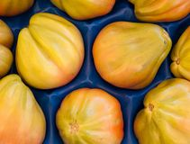 Pear-shaped green tomatoes Royalty Free Stock Images