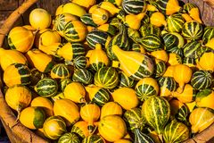 Pear Shaped Squash For Halloween. Pear Shaped Green & Yellow Squash For Halloween royalty free stock photography