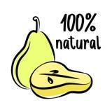 Pear sketch logo. Vector illustration. Hand drawn illustration. Royalty Free Stock Photography