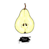 Pear slice vector drawing. Isolated hand drawn object on white b Royalty Free Stock Images
