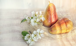 Pear still life with flowers art on the background of a fabric with beautiful sunlight, tinted, horizontal frame. Royalty Free Stock Photography