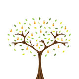 Pear tree. Vector image of pear tree isolated on white Royalty Free Stock Image