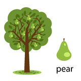 Pear tree royalty free illustration