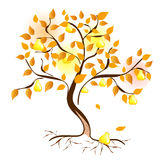Pear tree Stock Image