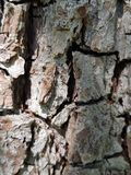 pear tree bark Stock Photos