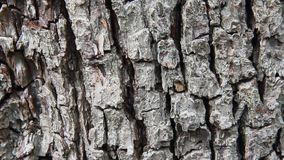 Pear tree bark Stock Photography