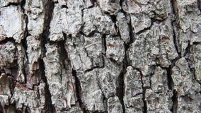 Pear tree bark. Close up of pear tree bark stock video