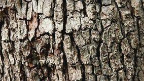 Pear tree bark. Close up of pear tree bark stock footage