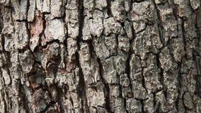 Pear tree bark. Close up of pear tree bark stock video footage