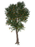 Pear tree - 3D render Stock Photography