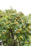 Pear on white Stock Photos