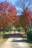 Pear Tree Lane in Autumn Stock Image