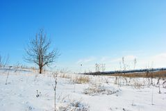 Pear tree without leaves on the hill, winter landscape with yellow reeds and trees lines on horizon background. Blue sky royalty free stock images