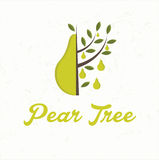 Pear tree with pear fruit Royalty Free Stock Image