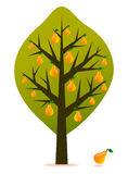Pear tree vector Stock Images