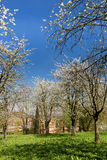 Pear trees in church garden Royalty Free Stock Photography