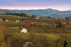 Pear Trees Orchard in Hood River Royalty Free Stock Photography