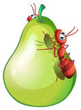 A pear with two ants. Illustration of a pear with two ants Royalty Free Stock Photography