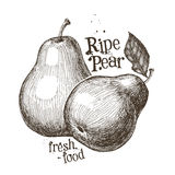 Pear vector logo design template. fruit or fresh Stock Images