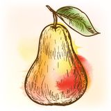 Pear, watercolor painting Royalty Free Stock Photo