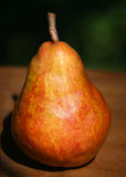 Pear Williams. After harvest in autumn Royalty Free Stock Photography