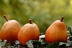Pear Williams Stock Photography