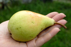 Pear on woman hand. Woman hand offer to you pear over green background Royalty Free Stock Photography