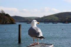 pearching seagull Στοκ φωτογραφία με δικαίωμα ελεύθερης χρήσης