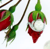 pearl кольца Стоковое Фото