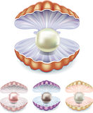 Pearl. Set of pearls in the shells of different colors Royalty Free Stock Photography
