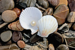 Pearl. In shell on background of the pebble Royalty Free Stock Photography