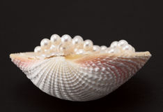 Free Pearl And Shell Royalty Free Stock Photos - 4963268