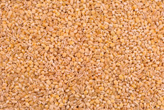 Pearl barley. Photograph of the sample pearl barley poured out onto the tray of rectangular Stock Image