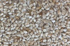 Pearl Barley Royalty Free Stock Images