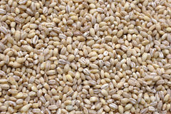 Pearl barley. Close up stock images