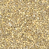 Pearl Barley background royalty free stock images