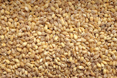 Pearl barley background Stock Image