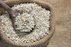 Pearl barley Royalty Free Stock Image