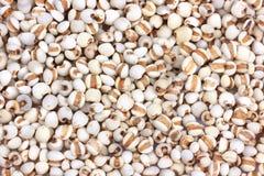 Pearl barley Stock Photos