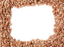 Barley grains frame Royalty Free Stock Photos