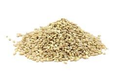 Pearl barley grain royalty free stock images